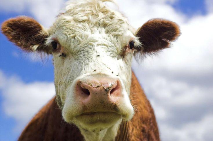 Alimentos que contienen proteína de leche de vaca