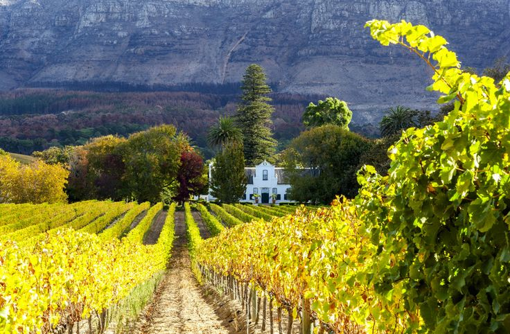 ***Autumn Vineyard, Cape Town (South Africa) by Ilonde van Hoolwerff on 500px c.
