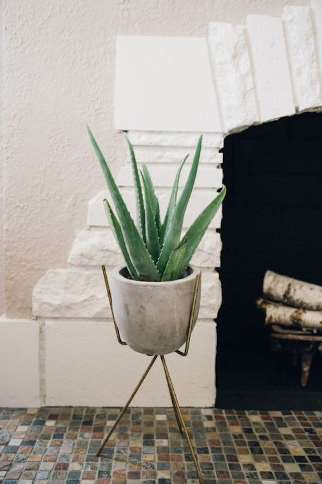 How cool is this modern aloe vera planter?
