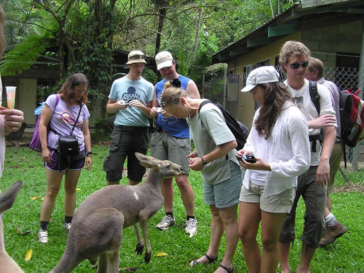 Wildlife Experience | Lync-Haven Rainforest Retreat | Cape Tribulation / Daintree Accommodation & Camping