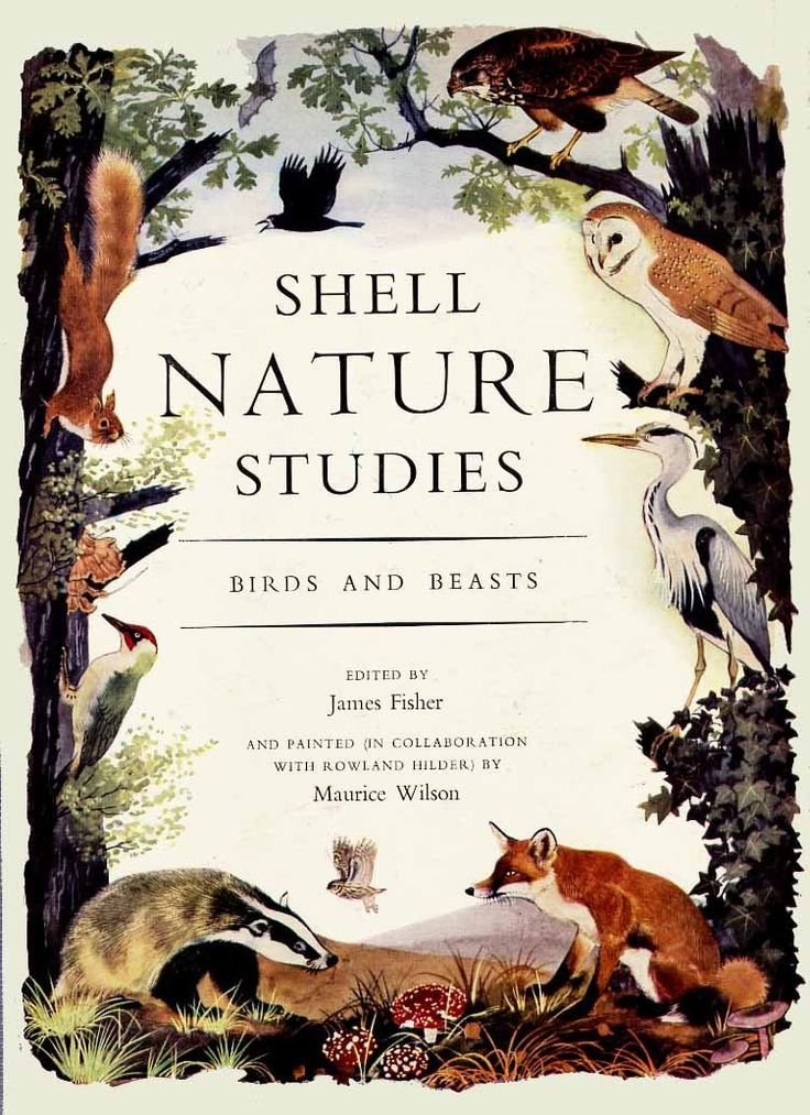 Shell Nature Studies, Birds and Beasts - illustrations by Maurice Wilson