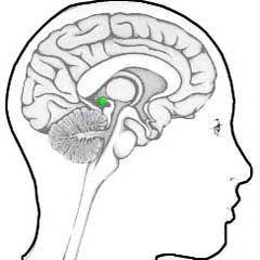 Wat is het verschil tussen je derde oog en de pijnappelklier