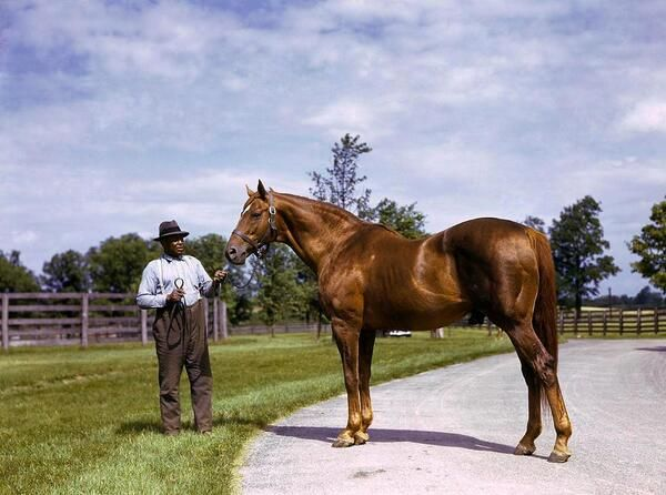 Man O' War, born March 29, 1917. My horse Ace was a descendant of Man O War:) Also born on March 29. He would have been 32 yesterday:)
