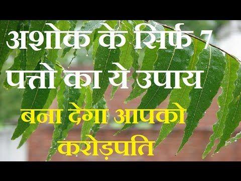 अशोक के सिर्फ 7 पत्तो का ये उपाय बना देगा आपको करोड़पति Astrology in Hindi