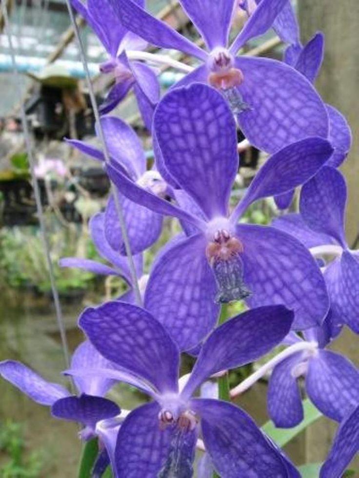 1000 images about orchideen und garten on pinterest. Black Bedroom Furniture Sets. Home Design Ideas