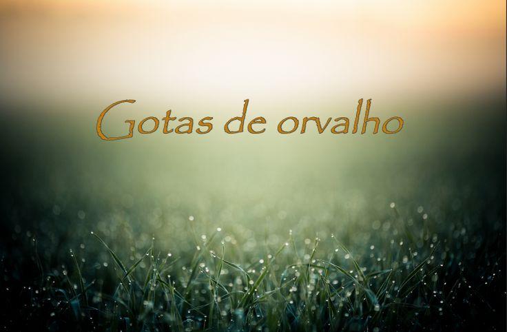 Gotas de orvalho (63)