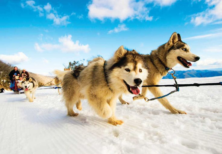 Holidays with Kids Specialists in Family Travel: The buzz on Mt Buller