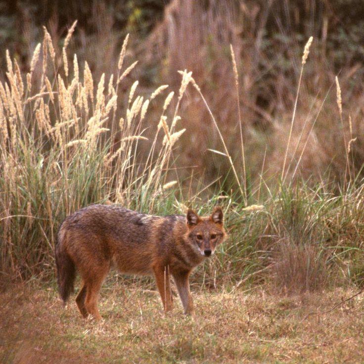 WWF - Απειλούμενα είδη
