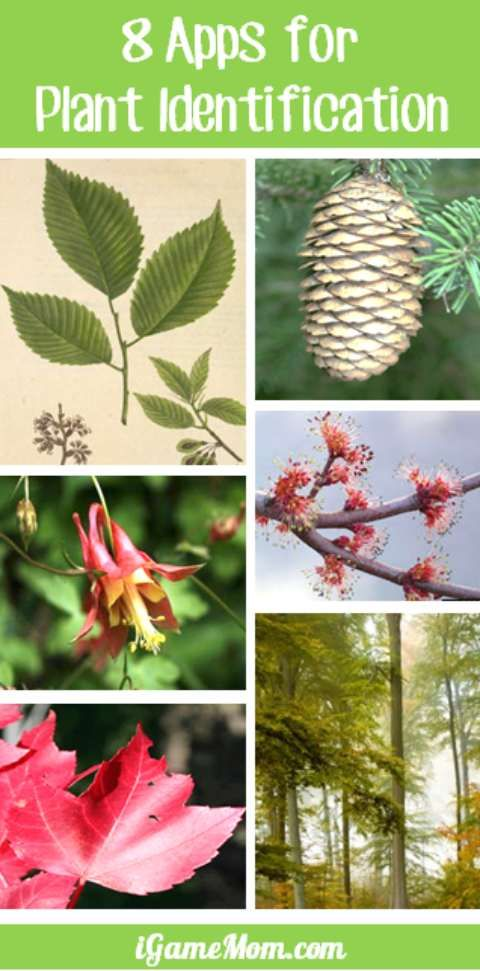 8 plant identification apps that will make your walk in the park or anywhere with trees, bushes, flowers more interesting. You can identify plants by leaves, flowers, tree bark, and many other features. Great learning tools to have on your phone or other mobile devices while outside with kids.