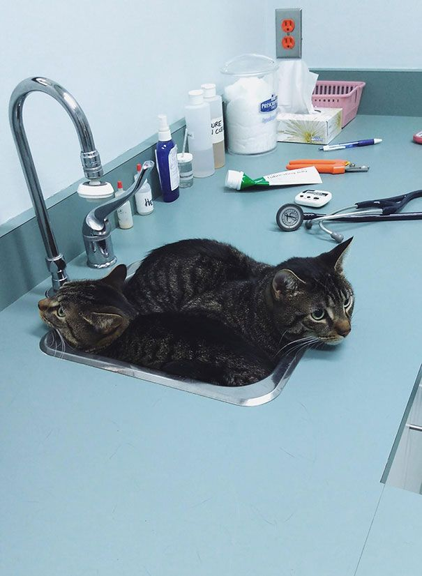 47 hiding places that funny cats found to avoid the dreaded veterinarian