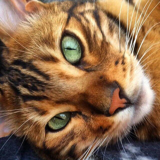 Jamais une fourrure de chat n'avait autant fait sensation. 14 photos sublimes.