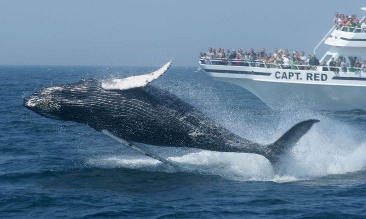 Ngắm cá voi di cư tuyệt đẹp ở San Diego