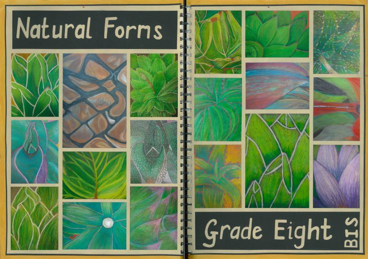 An detailed investigation of natural form, close up.