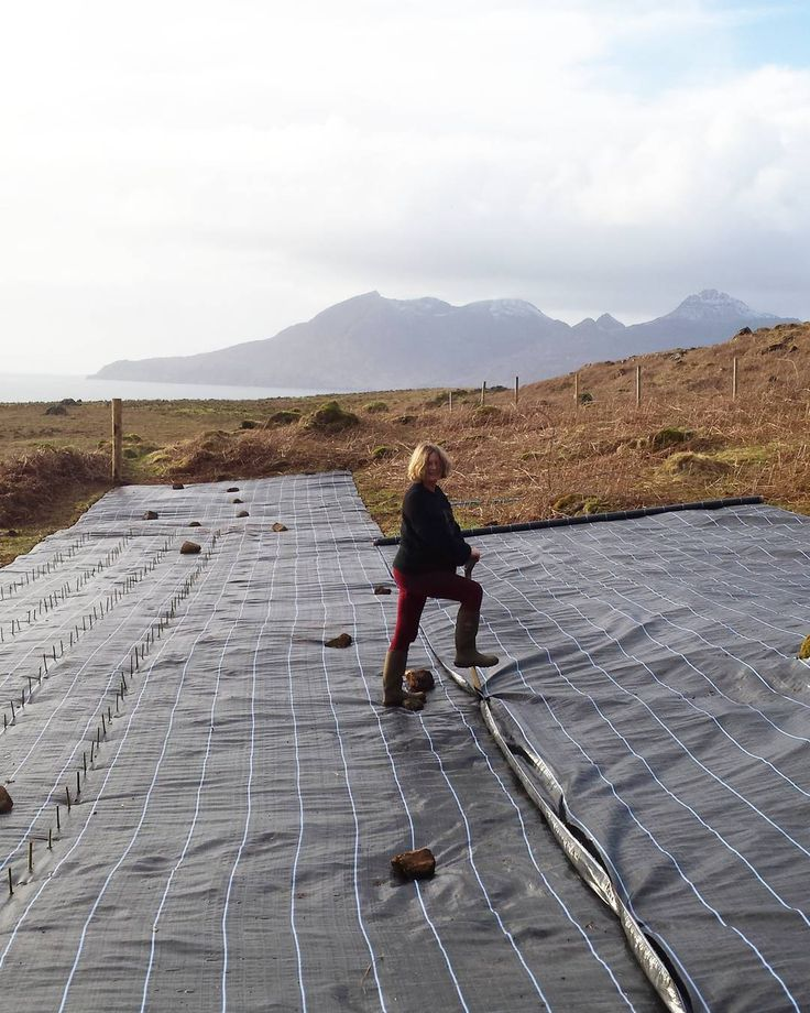 Planting a new willow field #isleofeigg #basketry #crofting