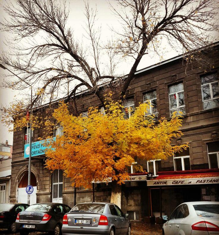 Rus Mİmari Taş Bina ve Fraxinus