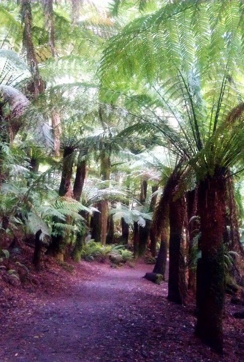 "Walking through the forest to ""St Columba Falls"" in Tasmania"
