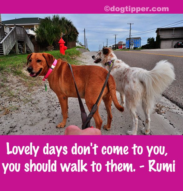 All dogs need daily walks, preferably twice a day. Not only will you be working on your training as you walk, but you'll be bonding with your dog in a way that very similar to how he would move and bond with a dog pack.