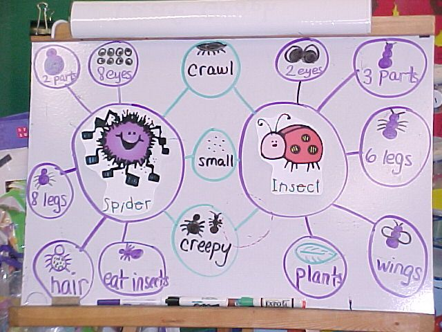 double bubble map-insects and spiders