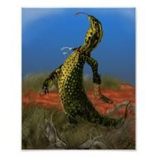 Image result for australian goanna cartoons