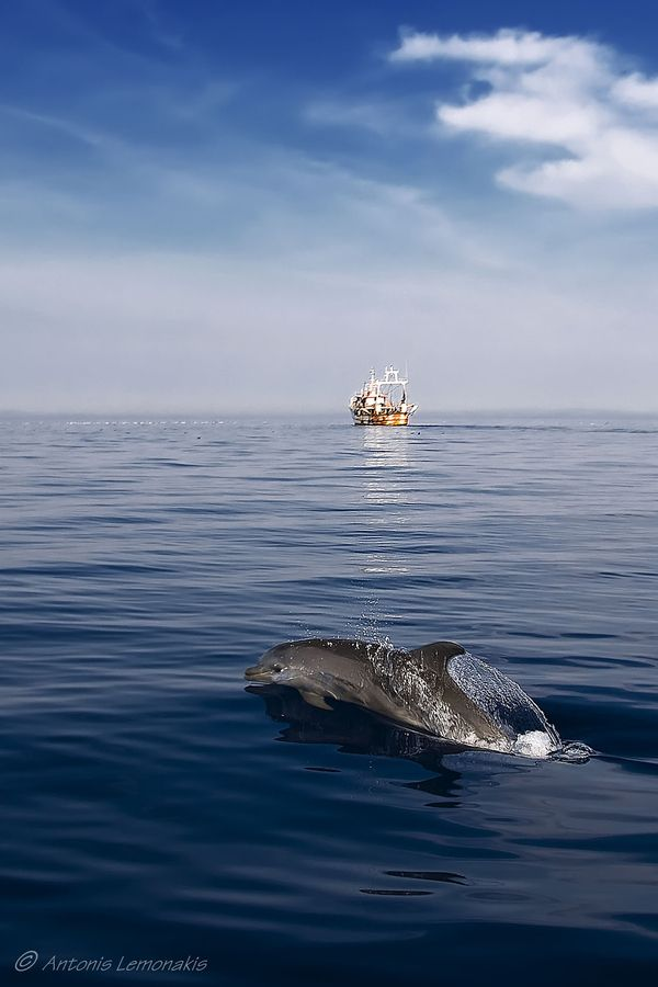 Be Careful Dolphin by Antonis Lemonakis. Dolphin playing south of Syros island Greece