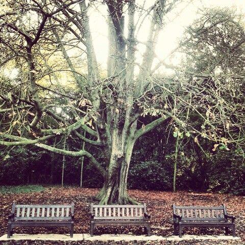 Tree#bench