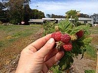 South Coast Harvest Experience
