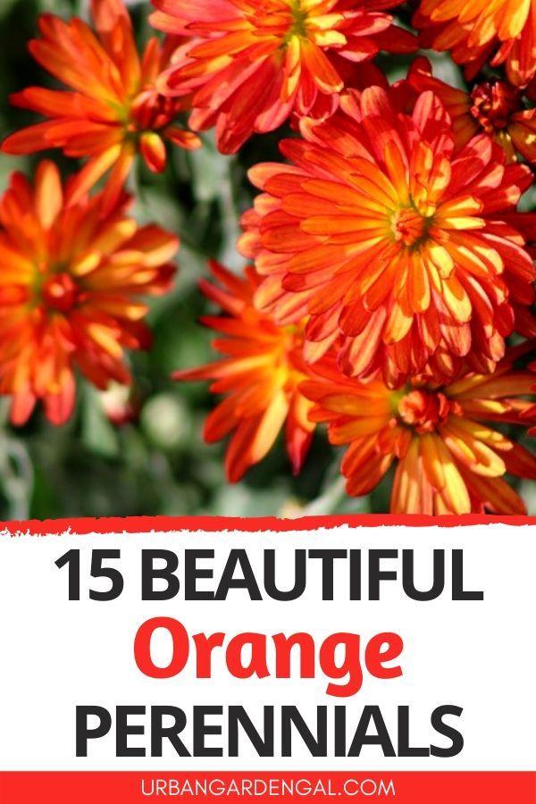 15 Beautiful Orange Perennial Flowers In 2020 Flowers Perennials Perennials Garden Flowers Perennials