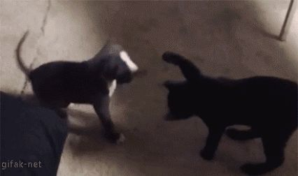 Puppy goes down with a combination boop