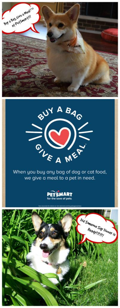 #sponsored Learn how PetSmart is giving meals to pets in need every time you buy pet food through their Buy a Bag, Give a Meal™ program! #fortheloveofpets