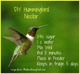 Hummingbird nectar is very easy to make. Just combine sugar and water and boil and store in the fridge.