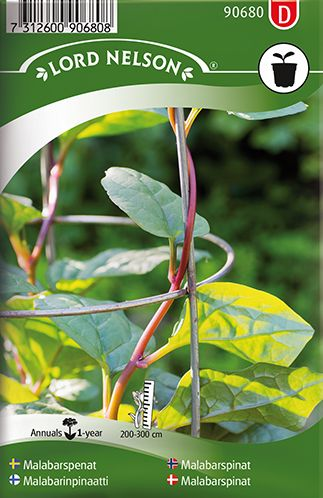 Klatrende bladgrønsag, som er smuk og dekorativ med røde stilke og mørkt grønne blade. Pluk blade efter behov eller høst hele planten, når den er lidt mere end en meter høj. Gem da ca. 20 cm af stammen og nogle bladhjørner, så vokser den op igen. Fin i madlavning, både blade og stilkene kan bruges som spinat. Også god i gratiner og nogle blade i en gryderet jævner den. Kan tage lidt tid at få til at spire.