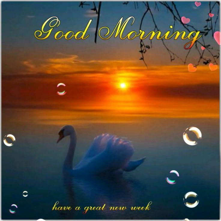 1772 Best Good Morning Images On Pinterest