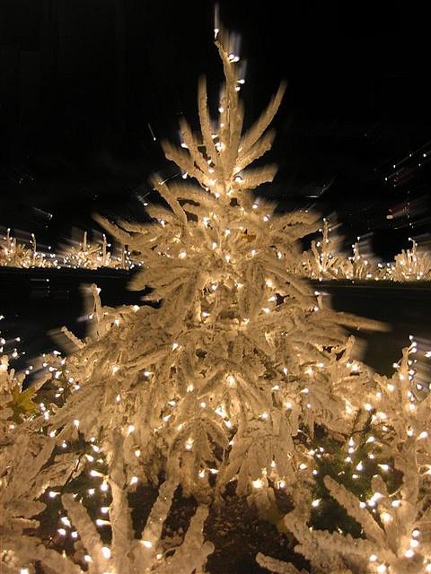 Madrid, Spain.  Feliz Navidad!