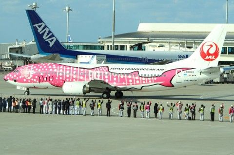 Wow! A special collaboration of the famous Chiraumi Aquarium in Okinawa & JAL (JTA) Japan Transocean Air. This flight is named Sakura Jinbei Jet & it is schedule to fly from Okinawa & it's island to the south part of Japan. Pretty cool isn't it!