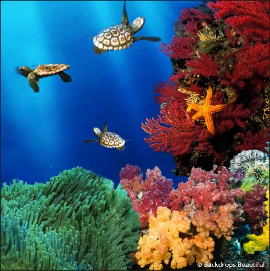 Coral Reef. #backdrops #turtles