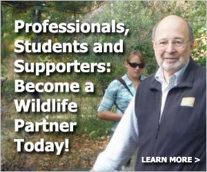The Wildlife Society: Where to get your degree