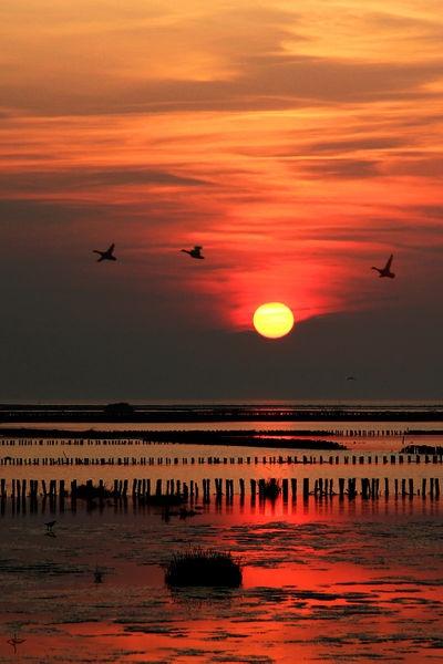 De Waddenzee, één van Nederlands mooiste plekken. www.stemvoornatuur.nl