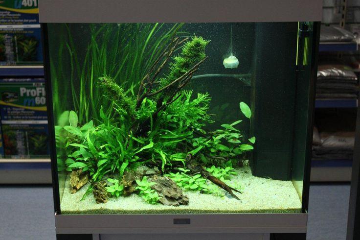 Layout 68 - Aquajardin - Tropica Aquarium Plants