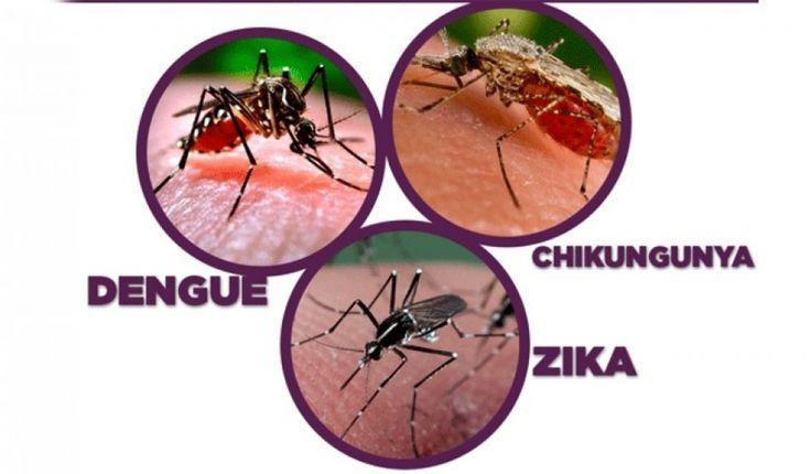 #Recomendaciones para evitar el contagio de dengue, chikungunya y zika - El Diario de Carlos Paz: El Diario de Carlos Paz Recomendaciones…