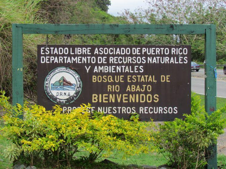 Actual habitat of the Puerto Rican parrots. Bosque Estatal de Rioa Abajo en Utuado.