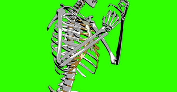 Huesos que componen la cadera. La articulación de la cadera consiste de la rótula y una cuenca que permite un mayor rango de movimiento en comparación con los otros tipos de articulaciones del cuerpo humano. La parte de la rótula tiene sólo un hueso: la cabeza femoral. La cuenca pélvica incluye tres huesos distintos pero unidos: ilion, pubis e isquion. Los anatomistas se ...