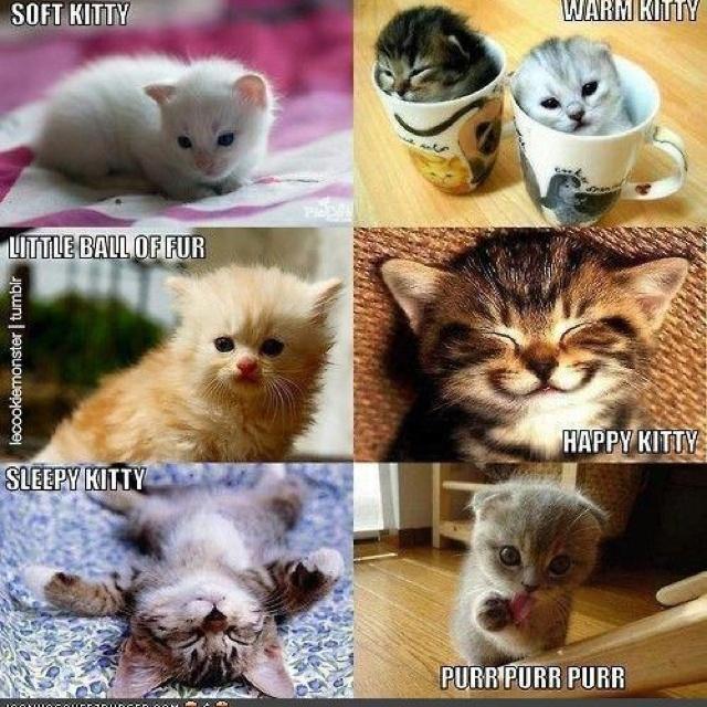 Makes me want to sing!: Cats, Happy Kitty, Warm Kitty, Soft Kitty, Sleepy Kitty, Songs, Big Bangs Theory, Mr. Big, Kittens