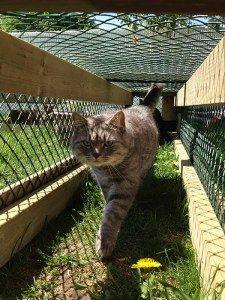 Chirpy Cats Cat Enclosure Cat Run