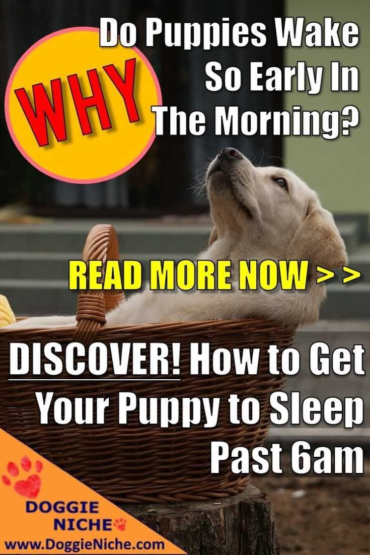How to get your puppy to sleep past 6am sleeping puppies