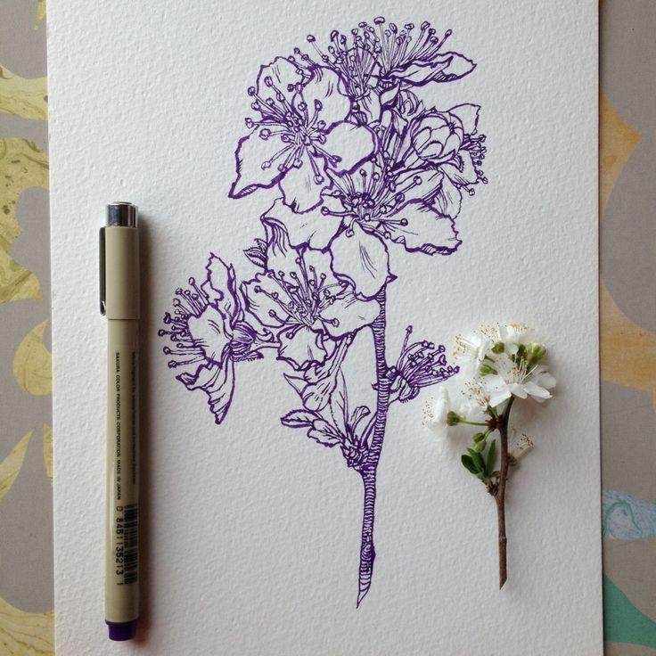 Flowers in Progress A beautiful series of illustrations by Noel Badges Pugh (5)…