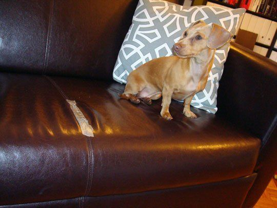 The 25 Best Leather Couch Repair Ideas On Pinterest