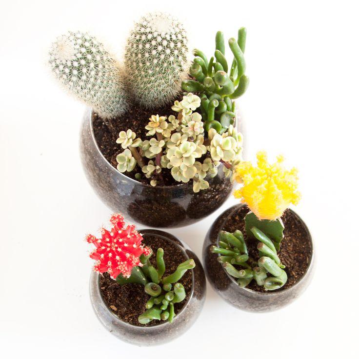 DIY Succulent & Cactus Terrariums | thesassylife