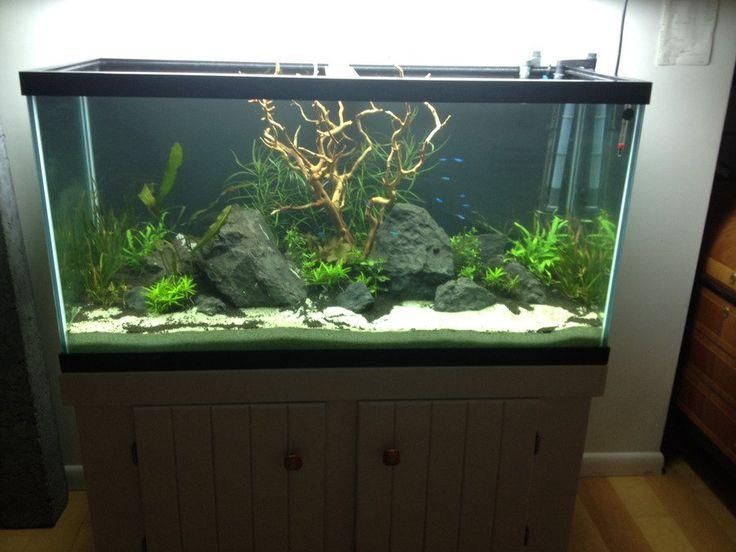 17 best ideas about aquarium backgrounds on pinterest for Fish tank background ideas
