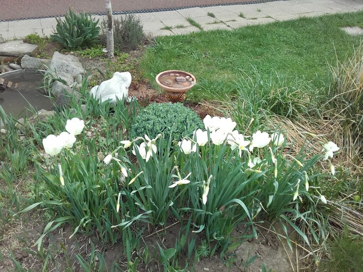 Tulipány a narcisy - polovina dubna 2018.