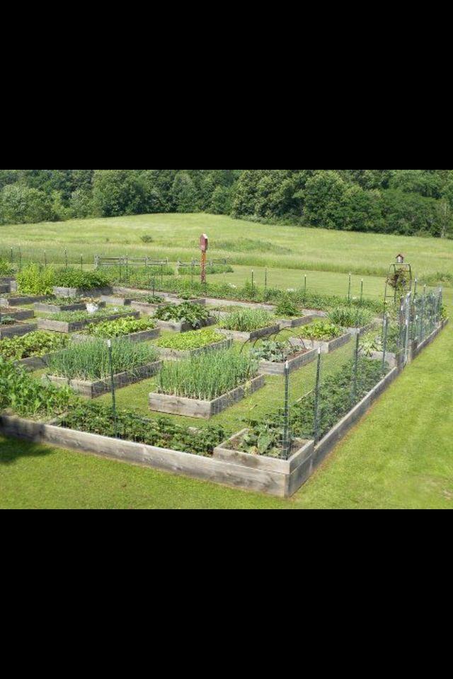 Awesome veggie garden